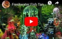 Aquarium Articles Silicone Simulation Fluorescent Sucker